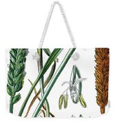 Wheat, Triticum Vulgare Weekender Tote Bag