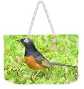 White-rumped Shama Weekender Tote Bag