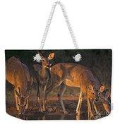 Whitetail Deer At Waterhole Texas Weekender Tote Bag by Dave Welling
