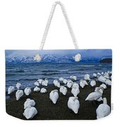 Whooper Swans In Winter Weekender Tote Bag