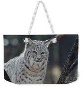 Wild Lynx Cat Weekender Tote Bag