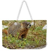 Yellow-bellied Marmot Weekender Tote Bag