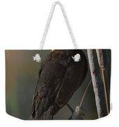 Yellow Headed Blackbird On Cattails Weekender Tote Bag