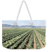 Young Broccoli Field For Seed Production Weekender Tote Bag