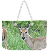 Young White-tailed Buck In Velvet Weekender Tote Bag
