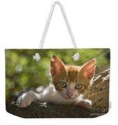 Kitten On A Wall Weekender Tote Bag