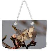 Black Cherry Tree  Weekender Tote Bag