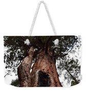 Giant Sequoia Trees Weekender Tote Bag