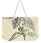 Vintage Botanical Illustration Weekender Tote Bag