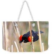1911 - Red-winged Blackbird Weekender Tote Bag