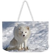 Arctic Fox... Weekender Tote Bag