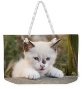 Cute 2 Month Old White Kitten Weekender Tote Bag