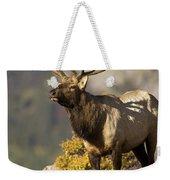Early Morning Bull Elk Weekender Tote Bag