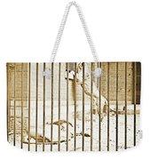 Lion Cage, Carnivore House, Philadelphia Zoo, C. 1900 Weekender Tote Bag