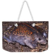 Mexican Burrowing Toad Weekender Tote Bag