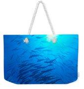 Micronesia Marine Life Weekender Tote Bag