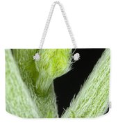 Node And Petioles On A Marijuana Plant Weekender Tote Bag