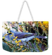 Noisy Miner In Oz Weekender Tote Bag