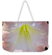 Peach Angel's Trumpet At Pilgrim Place In Claremont-california  Weekender Tote Bag