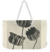Plant Studies, 1928, Nature Series, By Karl Blossfeldt  Weekender Tote Bag