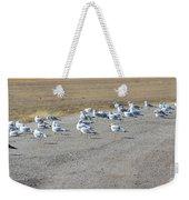 Ring Billed Gulls  Weekender Tote Bag