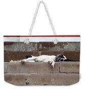Street Dog Sleeping On Steps Weekender Tote Bag