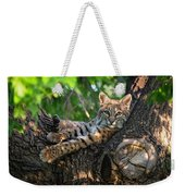 In A Lurch - Bobcat 8 Weekender Tote Bag
