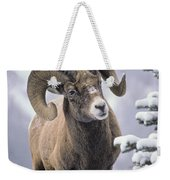 25084, Bighorn Sheep, Winter, Jasper Weekender Tote Bag