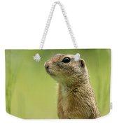 A European Ground Squirrel Standing In A Meadow In Spring Weekender Tote Bag