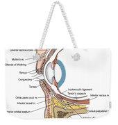 Illustration Of Eye Anatomy Weekender Tote Bag by Science Source