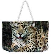 Jaguar Panthera Onca, Pantanal Weekender Tote Bag