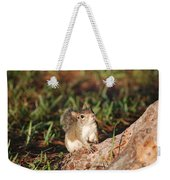 3- Squirrel Weekender Tote Bag