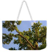 3256 Photography Forest Scene  Weekender Tote Bag