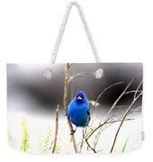 3553-015 - Indigo Bunting Weekender Tote Bag