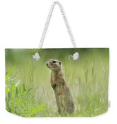 A European Ground Squirrel Standing In A Meadow In Spring Weekender Tote Bag