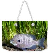 Bluegill Lepomis Macrochirus Weekender Tote Bag