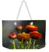 Blurred Seasonal Flower With Dark Background Weekender Tote Bag