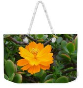 Australia - Cosmos Carpet Yellow Flower Weekender Tote Bag