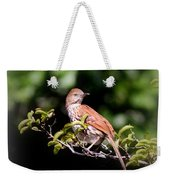 4979 - Brown Thrasher Weekender Tote Bag