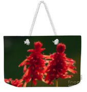 Blurred Seasonal Flower With Dark Background Weekender Tote Bag