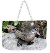 Juvenile Male Wood Duck Weekender Tote Bag