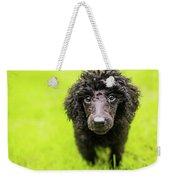 Poodle Puppy Weekender Tote Bag