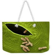 Sem Of E. Coli Bacteria On Lettuce Weekender Tote Bag