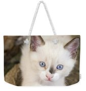 Cute 2 Month Old White Kitten Weekender Tote Bag