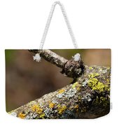 Bare Tree Branches In Early Spring Weekender Tote Bag