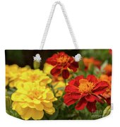 Tagetes Patula Fully Bloomed French Marigold At Garden In Octob Weekender Tote Bag