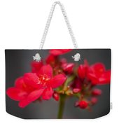 Jatropha Blossoms Painted  Weekender Tote Bag
