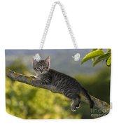 Kitten In A Tree Weekender Tote Bag