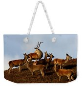 Red Deer In The Highlands Weekender Tote Bag