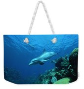 Bottlenose Dolphin Tursiops Truncatus Weekender Tote Bag